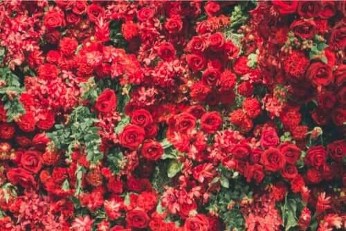 6 plantas vermelhas bonitas e vistosas