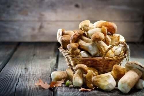 Cesta de cogumelos
