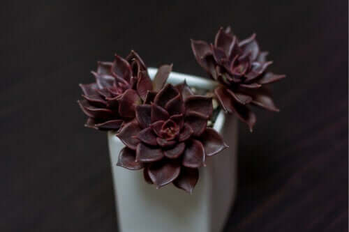 7 peculiares plantas pretas