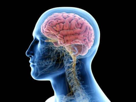 O tecido cerebral é o alvo da encefalite