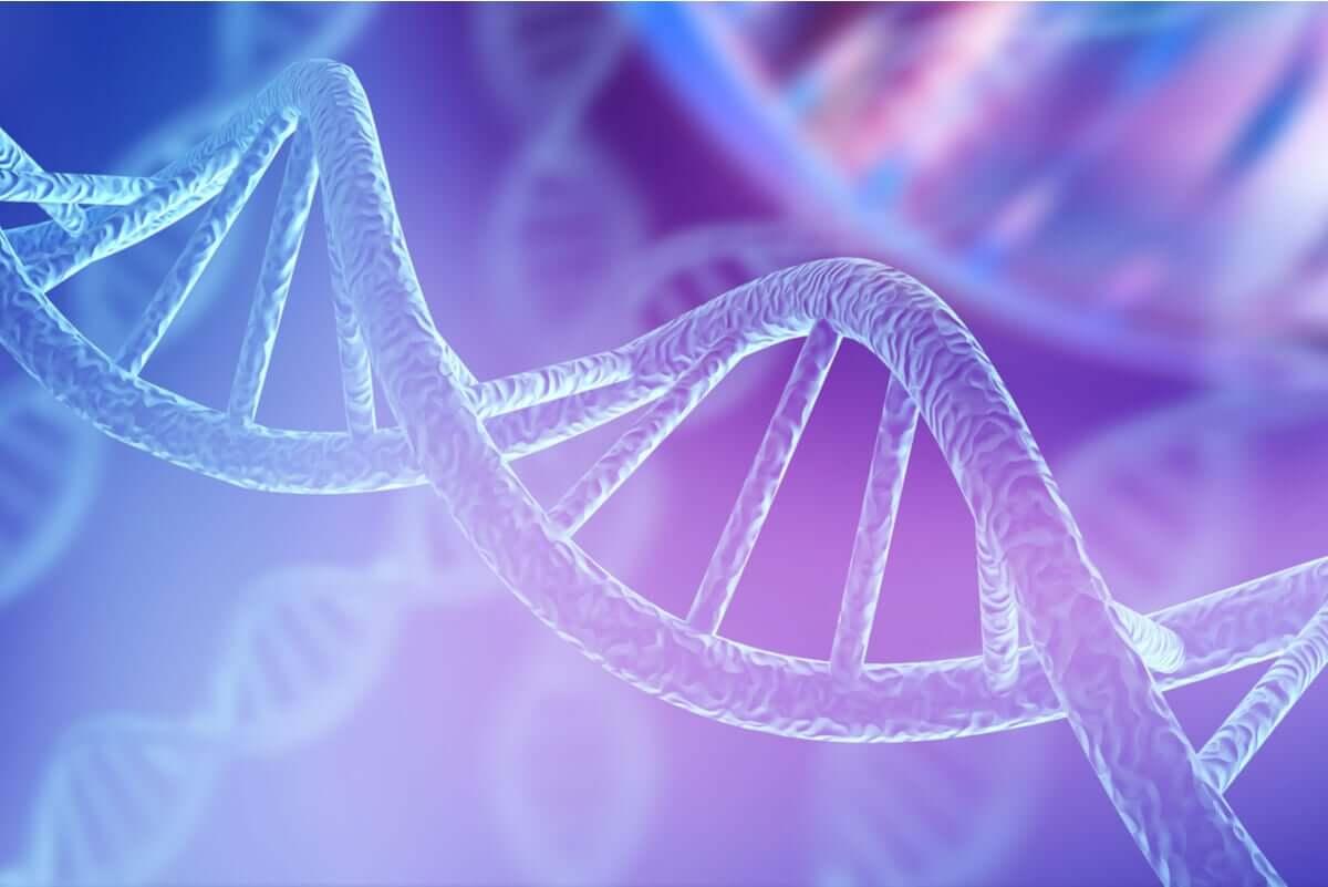 A braquidactilia é genética