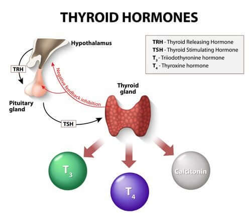 Hormônios da tireoide