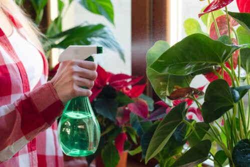 7 plantas de interior que absorvem umidade