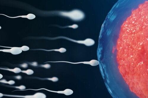 Espermatozoides e óvulo