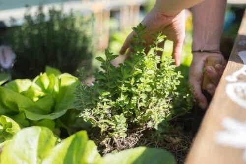 Conselhos para cultivar plantas em terraços