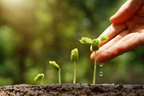 6 dicas para fazer um jardim sustentável