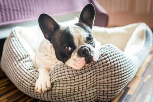 5 ideias para fazer uma casinha para o seu animal de estimação