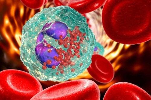 Glóbulos brancos e vermelhos