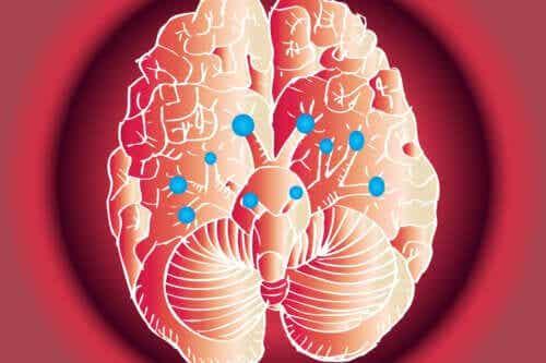As funções dos 12 nervos cranianos