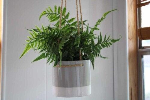 Vaso de planta pendurado