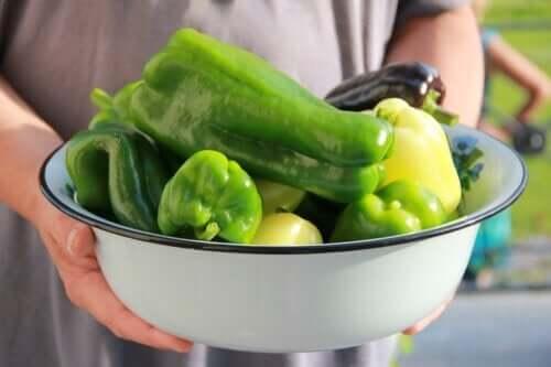 Como plantar pimentão em casa?