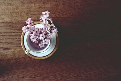 Como preparar um chá de flor de cerejeira para combater a retenção de líquidos