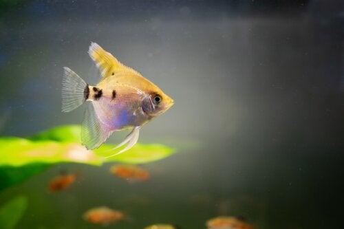 Água turva no aquário: o que fazer e como limpar?