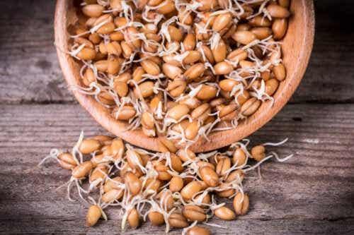 Broto de trigo: nutrição, propriedades e como prepará-lo